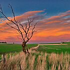 """""""Day's End At Ceres"""" by Phil Thomson IPA"""