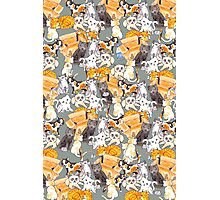 Lots of Cats Photographic Print
