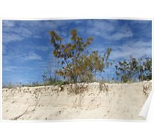 Lone Tree at Palm Beach Poster