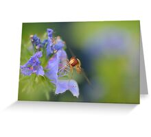 Hoverfly 3    Greeting Card