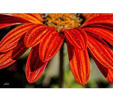Orange Drops Photographic Print