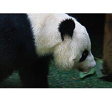 Tian Tian Photographic Print