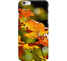 Backlit Vine Maple Leaves iPhone Case/Skin
