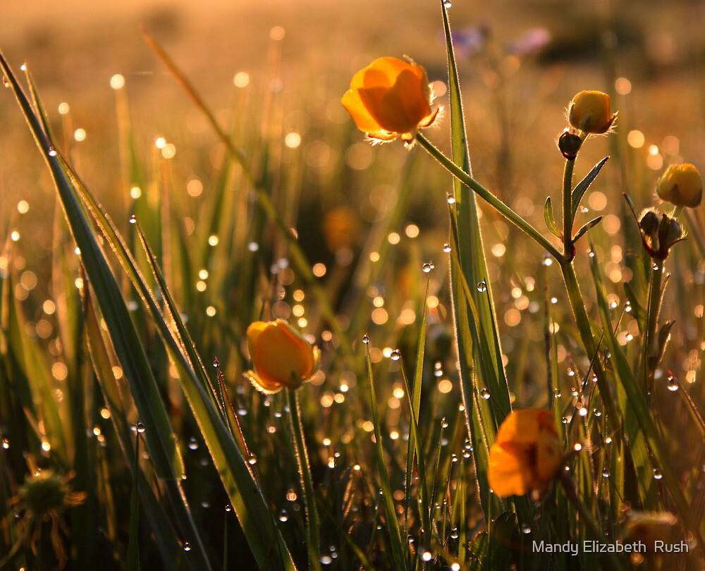Diamonds At Dawn by Mandy Elizabeth  Rush