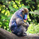 Animals IV by James McKenzie