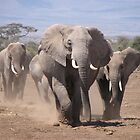 African Elephant  by Mandy Elizabeth  Rush