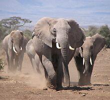 African Elephant  by Mandy Elizabeth  Rush