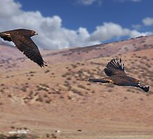 Hawks of Palomino Valley by SB  Sullivan
