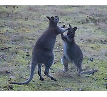 Two joeys sparring for fun  or a territorial thing? Photographic Print