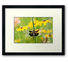 Widow Skimmer Dragonfly in the Backyard Framed Print