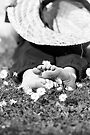 Grounding by Melissa Dickson