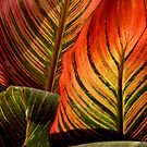 Vivid Canna Leaves by WildestArt