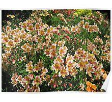 County Wicklow Flowers, Ireland Poster