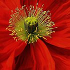 Poppy. by Jeanette Varcoe.