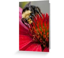 Gold Dusted Greeting Card