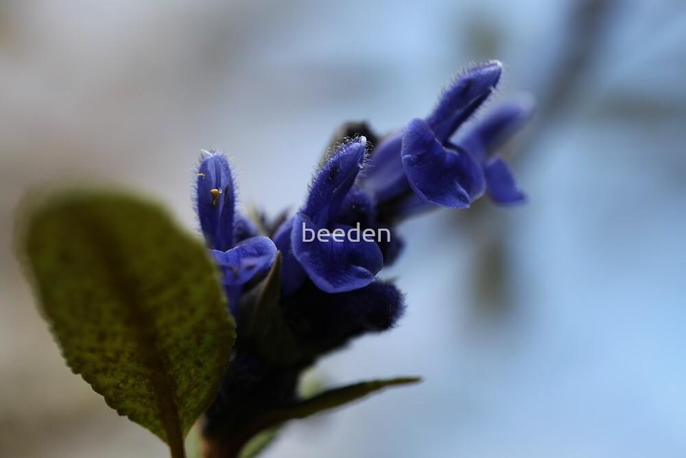 Olinda -11 by beeden