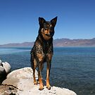 Alex...at Pyramid Lake Suttcliffe Nevada by Anthony & Nancy  Leake