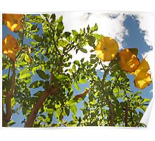Trumpet flowers Poster