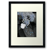 Blue Lace Hydrangea Framed Print