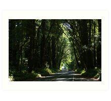 Hwy Redwood Art Print