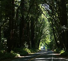 Hwy Redwood by Arod28