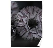 Cemetery flower mauve Poster