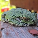 Lazy Frog  by DConsortium