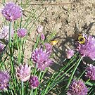 Bees Love Chives Too by DConsortium