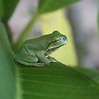 Froggy by bassgirl1970