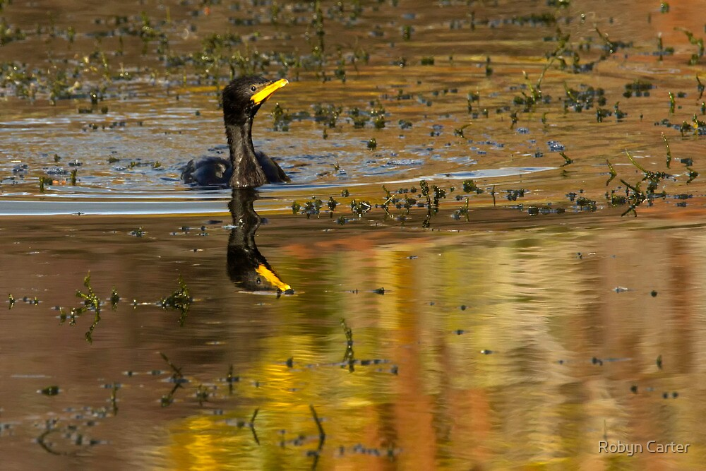 Little Black Shag at Sun down by Robyn Carter