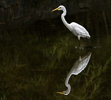Reflected egret for iPad by Celeste Mookherjee