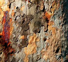 Natures Pallet. Bark pattern. by ronsphotos
