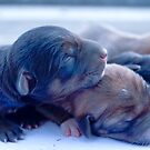 Just born puppies by AbhishekAnand