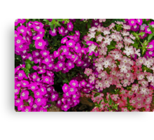 '' IN THE PINK '' Canvas Print