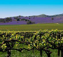 Barossa Hillside Landscape by jwwallace