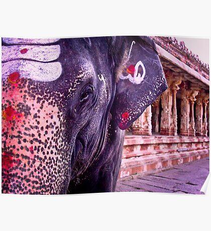 Lakshmi the Elephant Poster