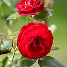 Red Roses by Lisa Marie Robinson