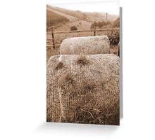 old round bales in Irish countryside Greeting Card