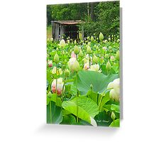 Lotus Pond full of Blooming Blossoms! Greeting Card