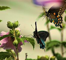 Two In Flight by Rick  Friedle