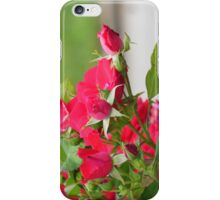 A Rose is a Rose iPhone Case/Skin