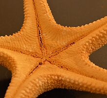 Starfish by AnnaJaneImages