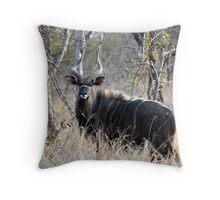 Nyala Bull Throw Pillow