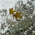 Symbols of Autumn  by Georgia Mizuleva