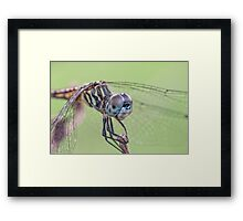 Close Encounter with Mrs. Dasher  Framed Print