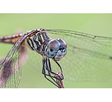 Close Encounter with Mrs. Dasher  Photographic Print