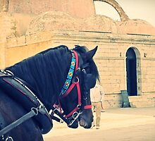An uneasy relationship: horse and man in Chania, Greece by Susan Wellington