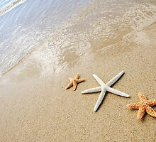 Three Sea Stars by printscapes