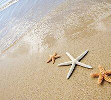 Three Sea Stars by printscapes