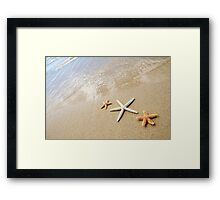 Three Sea Stars Framed Print